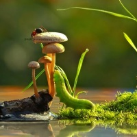 O Mundo Magico dos Cogumelos #Mushrooms and their Magic Reality